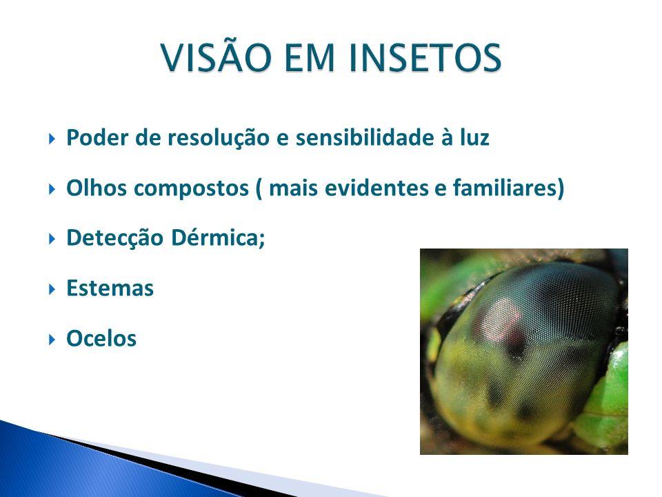 Poder de resolução e sensibilidade à luz Olhos compostos ( mais evidentes e familiares) Detecção Dérmica; Estemas Ocelos