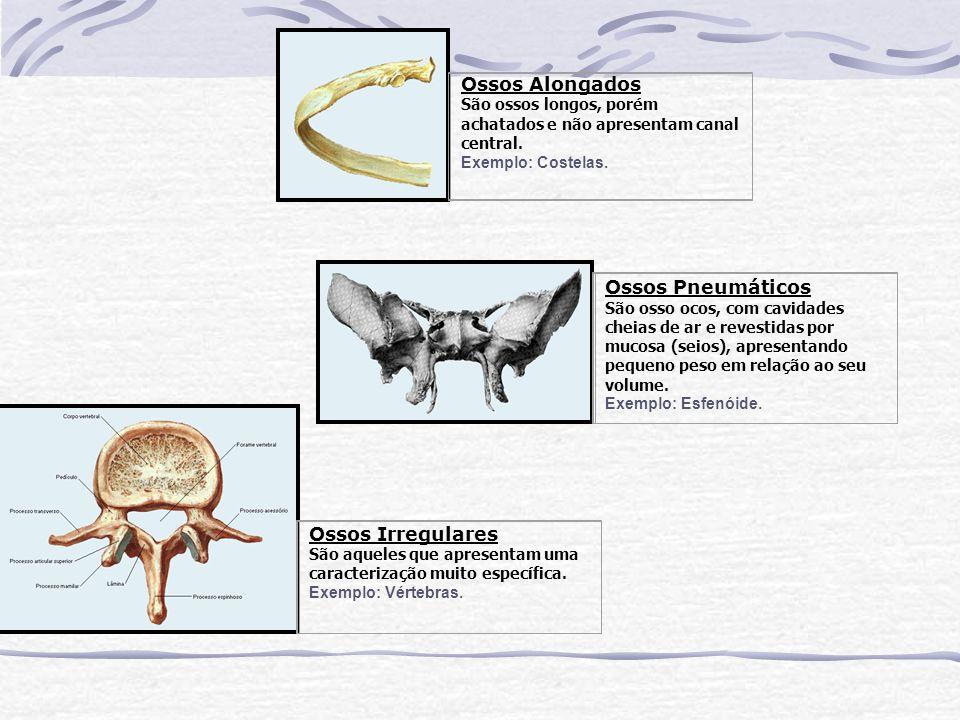 Ossos Alongados São ossos longos, porém achatados e não apresentam canal central. Exemplo: Costelas. Ossos Pneumáticos São osso ocos, com cavidades ch