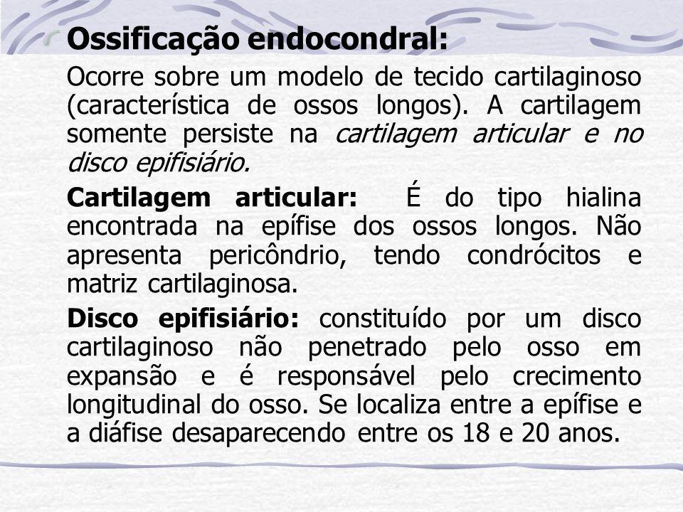 Ossificação endocondral: Ocorre sobre um modelo de tecido cartilaginoso (característica de ossos longos). A cartilagem somente persiste na cartilagem