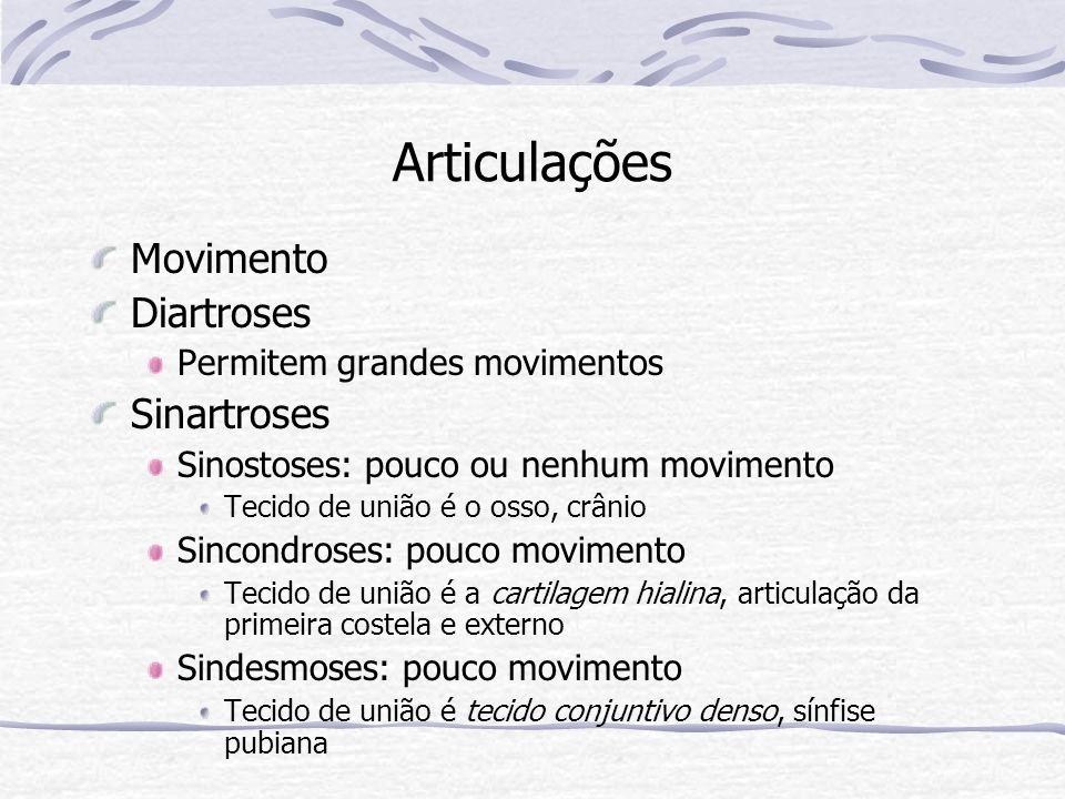 Articulações Movimento Diartroses Permitem grandes movimentos Sinartroses Sinostoses: pouco ou nenhum movimento Tecido de união é o osso, crânio Sinco
