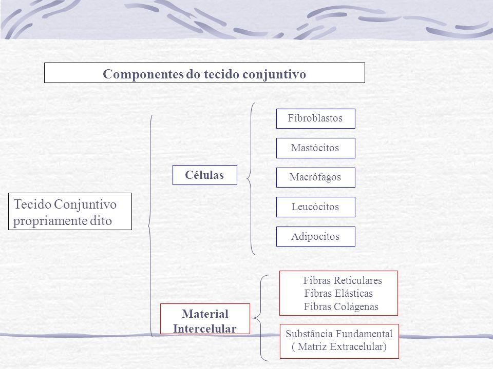 Componentes do tecido conjuntivoFibroblastosMastó citosCélulasMacrofagosLeuco citosAdipocitosTecido ConjuntivoFibras ReticularesFibras ElásticasFibras