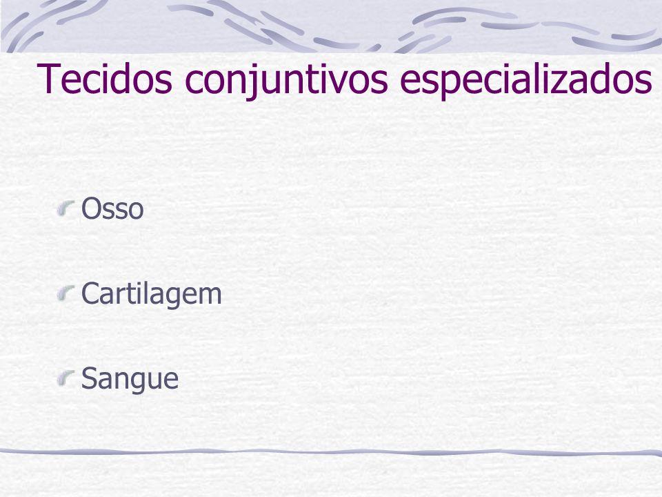Tecidos conjuntivos especializados Osso Cartilagem Sangue
