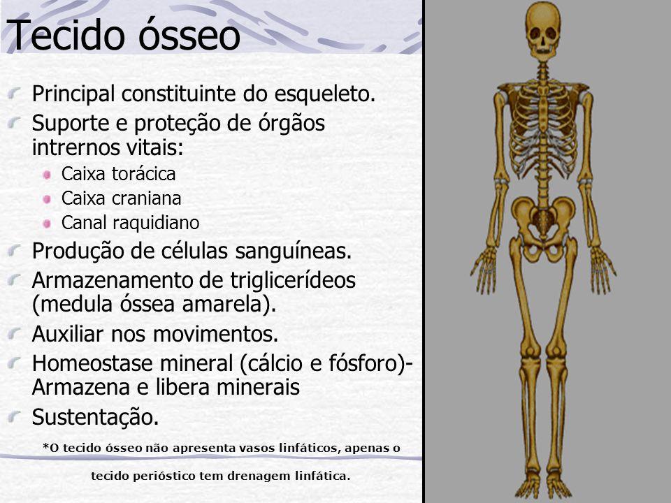 Tecido ósseo Principal constituinte do esqueleto. Suporte e proteção de órgãos intrernos vitais: Caixa torácica Caixa craniana Canal raquidiano Produç