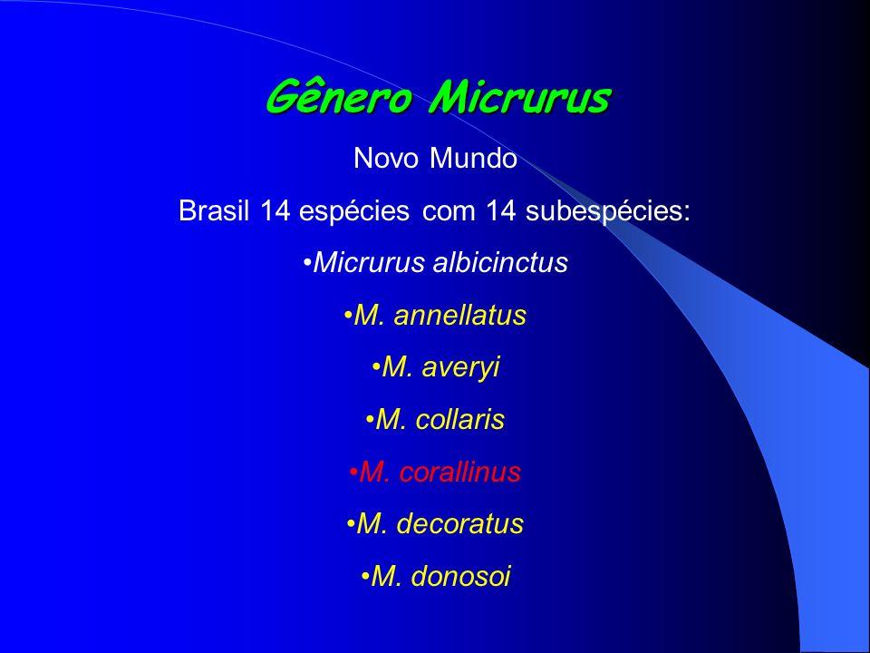 Gênero Micrurus Novo Mundo Brasil 14 espécies com 14 subespécies: Micrurus albicinctus M. annellatus M. averyi M. collaris M. corallinus M. decoratus