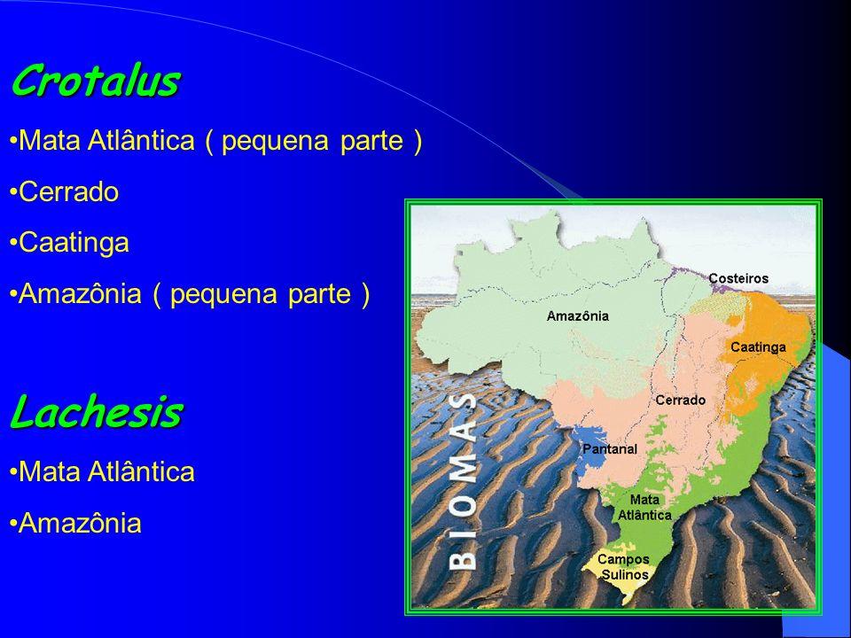 Crotalus Mata Atlântica ( pequena parte ) Cerrado Caatinga Amazônia ( pequena parte )Lachesis Mata Atlântica Amazônia