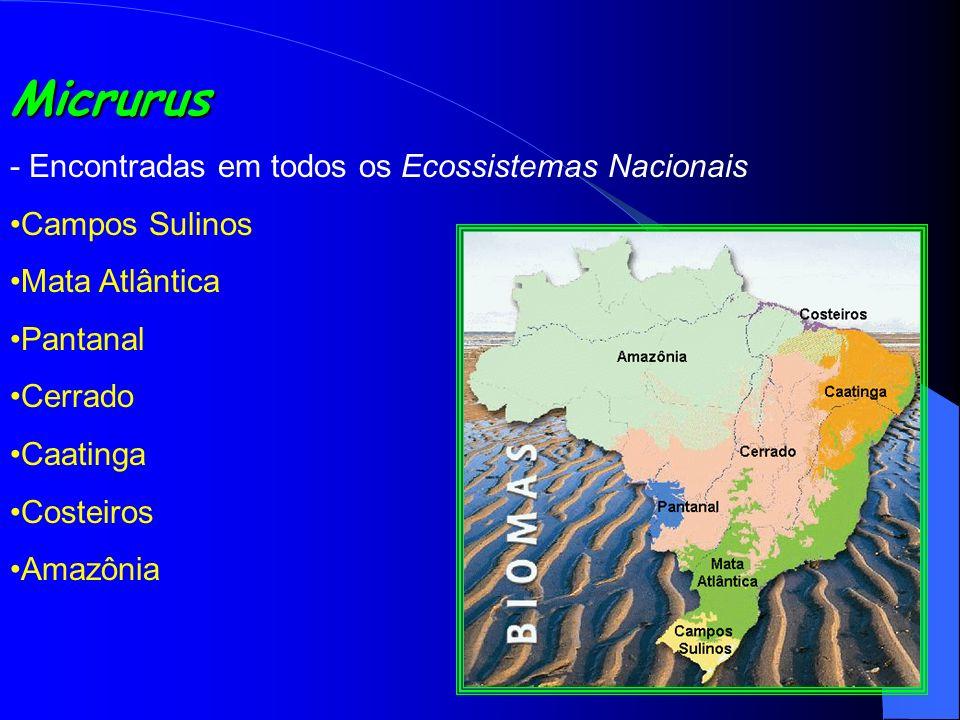 Micrurus - Encontradas em todos os Ecossistemas Nacionais Campos Sulinos Mata Atlântica Pantanal Cerrado Caatinga Costeiros Amazônia