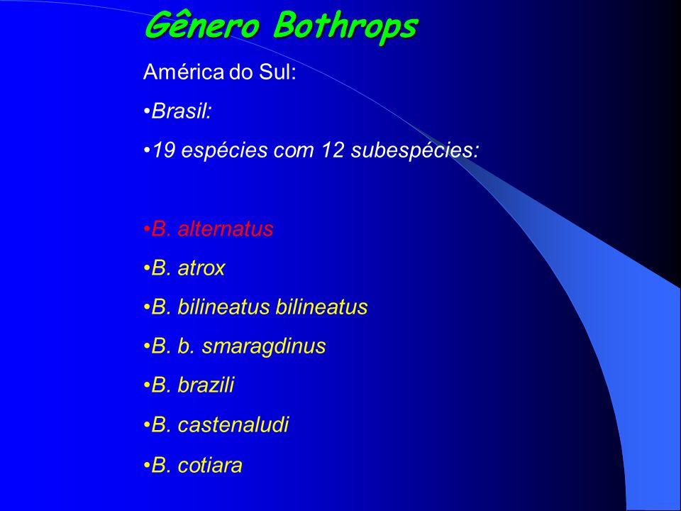 Gênero Bothrops América do Sul: Brasil: 19 espécies com 12 subespécies: B. alternatus B. atrox B. bilineatus bilineatus B. b. smaragdinus B. brazili B