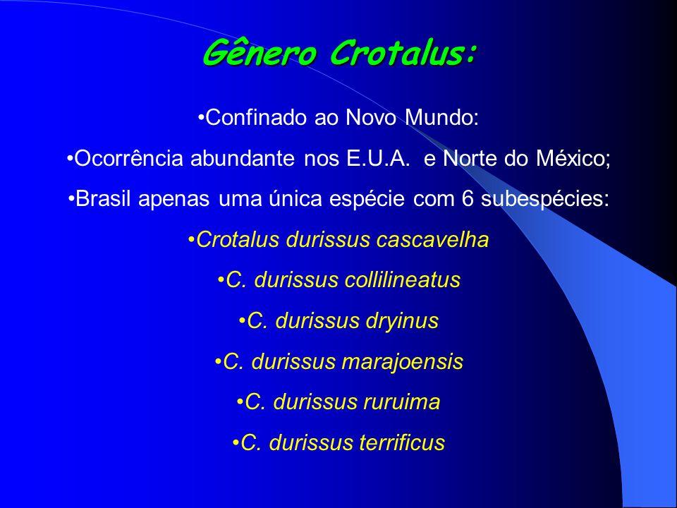 Gênero Crotalus: Confinado ao Novo Mundo: Ocorrência abundante nos E.U.A. e Norte do México; Brasil apenas uma única espécie com 6 subespécies: Crotal