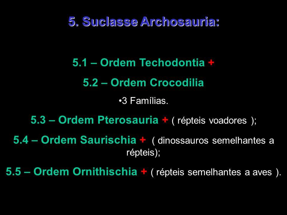 5. Suclasse Archosauria: 5.1 – Ordem Techodontia + 5.2 – Ordem Crocodilia 3 Famílias. 5.3 – Ordem Pterosauria + ( répteis voadores ); 5.4 – Ordem Saur