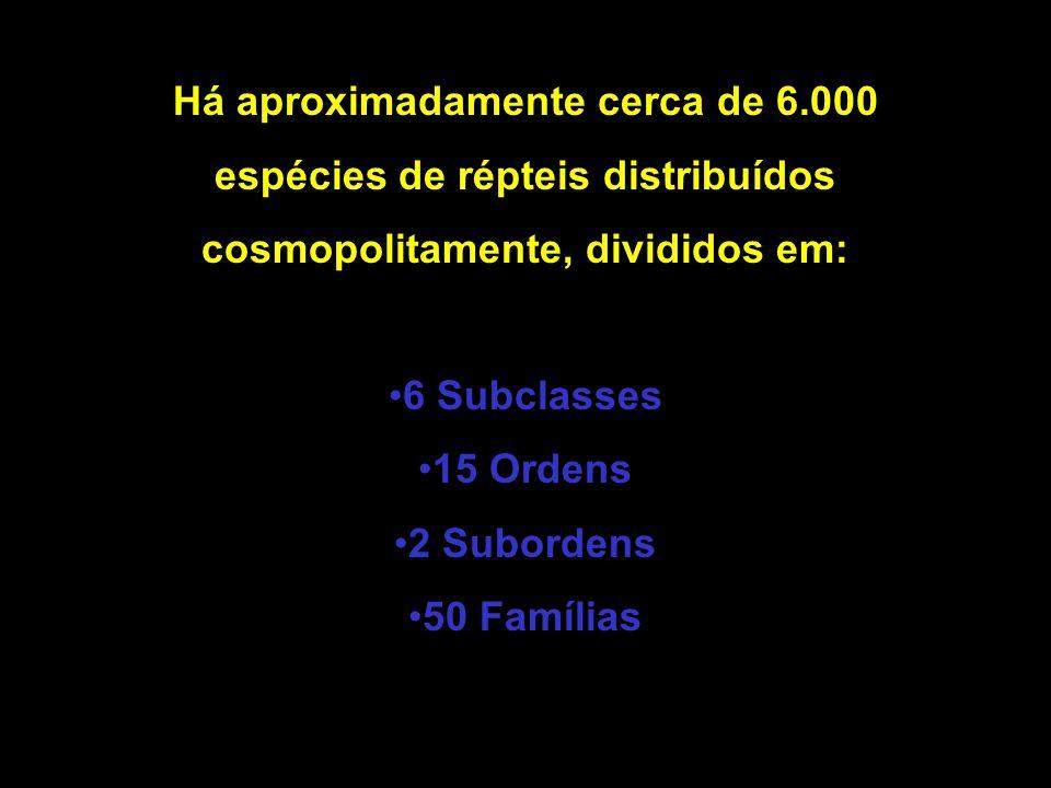 Há aproximadamente cerca de 6.000 espécies de répteis distribuídos cosmopolitamente, divididos em: 6 Subclasses 15 Ordens 2 Subordens 50 Famílias