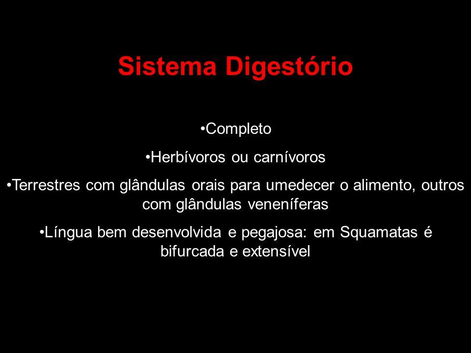 Sistema Digestório Completo Herbívoros ou carnívoros Terrestres com glândulas orais para umedecer o alimento, outros com glândulas veneníferas Língua