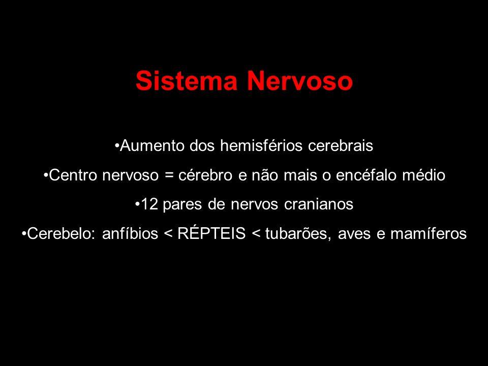 Sistema Nervoso Aumento dos hemisférios cerebrais Centro nervoso = cérebro e não mais o encéfalo médio 12 pares de nervos cranianos Cerebelo: anfíbios