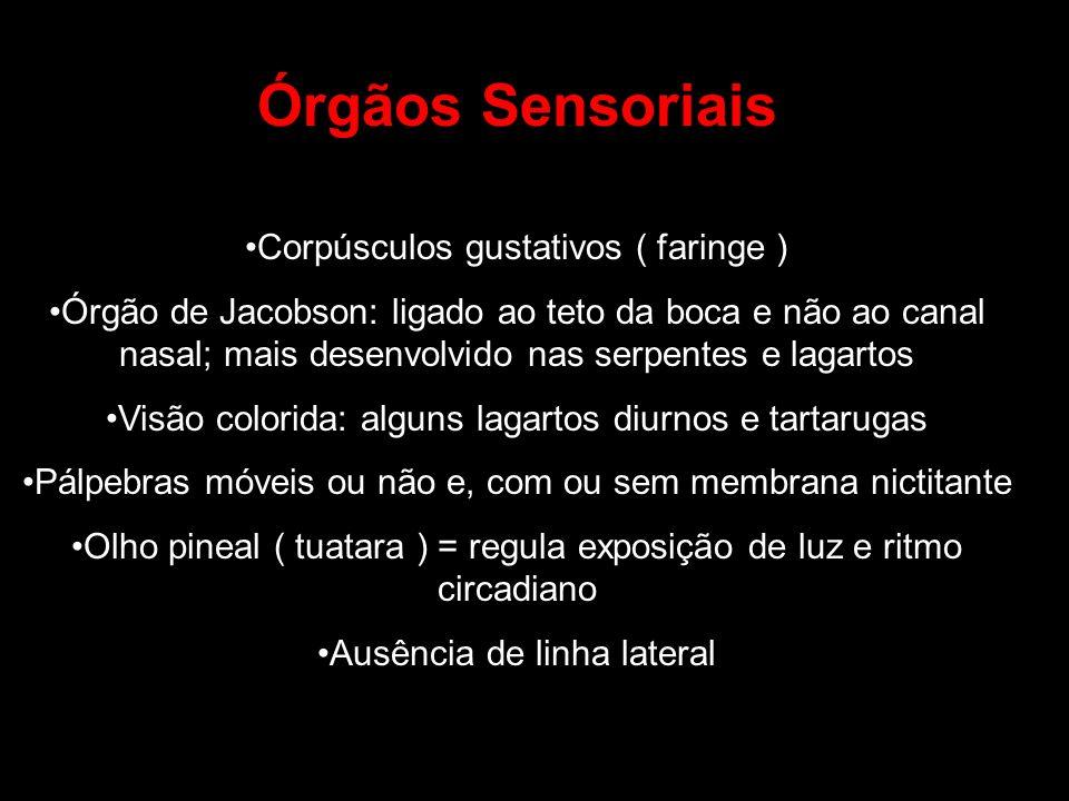 Órgãos Sensoriais Corpúsculos gustativos ( faringe ) Órgão de Jacobson: ligado ao teto da boca e não ao canal nasal; mais desenvolvido nas serpentes e