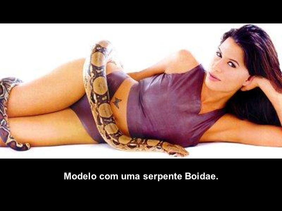 Modelo com uma serpente Boidae.