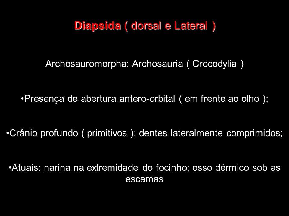 Diapsida ( dorsal e Lateral ) Archosauromorpha: Archosauria ( Crocodylia ) Presença de abertura antero-orbital ( em frente ao olho ); Crânio profundo