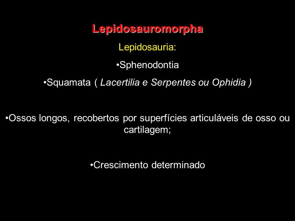 Lepidosauromorpha Lepidosauria: Sphenodontia Squamata ( Lacertilia e Serpentes ou Ophidia ) Ossos longos, recobertos por superfícies articuláveis de o