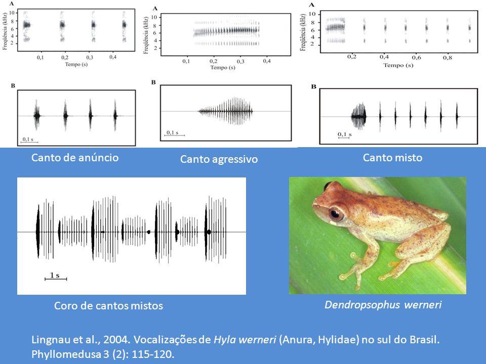 Canto de anúncio Canto agressivo Canto misto Coro de cantos mistos Dendropsophus werneri Lingnau et al., 2004. Vocalizações de Hyla werneri (Anura, Hy
