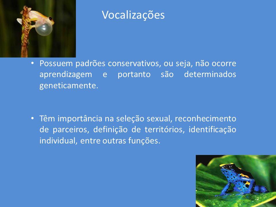 Vocalizações Possuem padrões conservativos, ou seja, não ocorre aprendizagem e portanto são determinados geneticamente. Têm importância na seleção sex