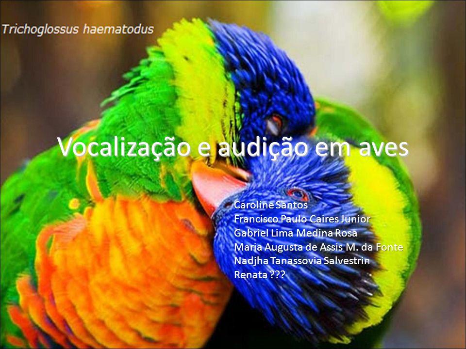 Vocalização e audição em aves Caroline Santos Francisco Paulo Caires Junior Gabriel Lima Medina Rosa Maria Augusta de Assis M. da Fonte Nadjha Tanasso