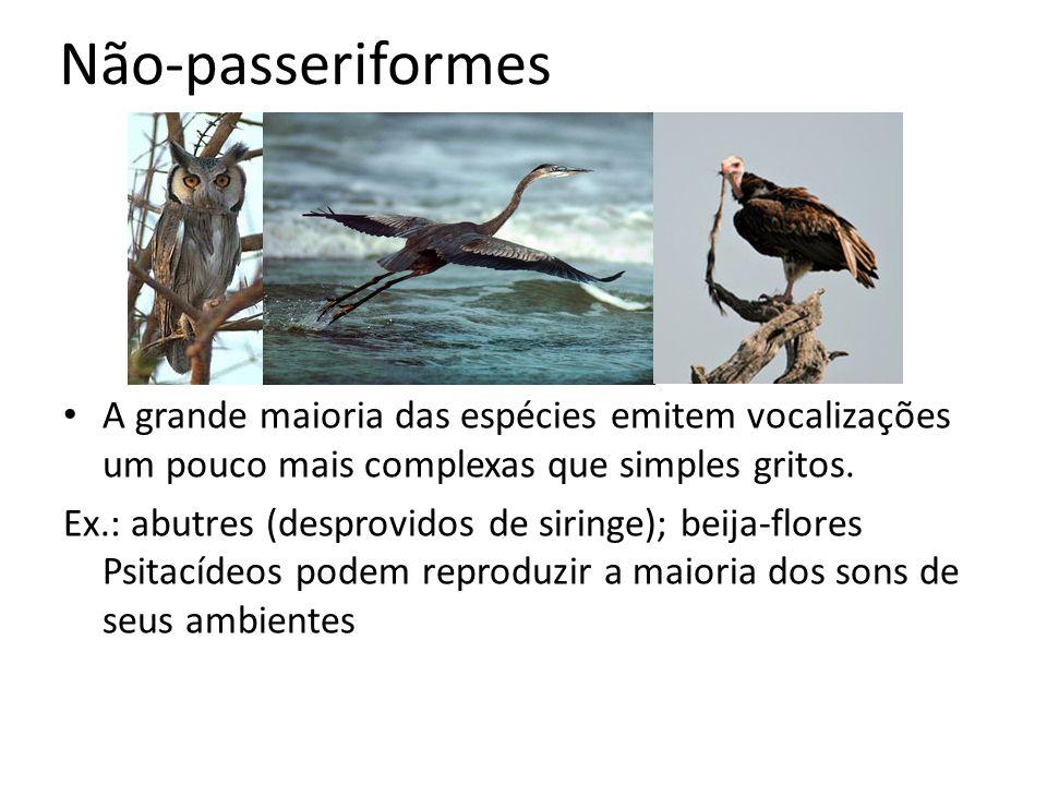 Não-passeriformes A grande maioria das espécies emitem vocalizações um pouco mais complexas que simples gritos. Ex.: abutres (desprovidos de siringe);