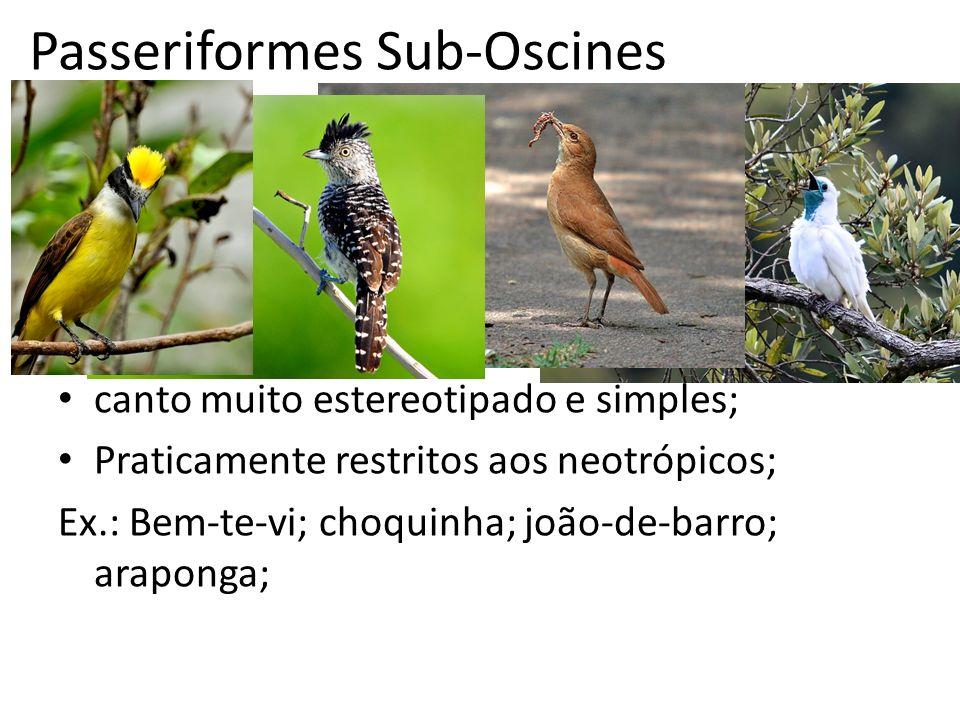 Passeriformes Sub-Oscines canto muito estereotipado e simples; Praticamente restritos aos neotrópicos; Ex.: Bem-te-vi; choquinha; joão-de-barro; arapo