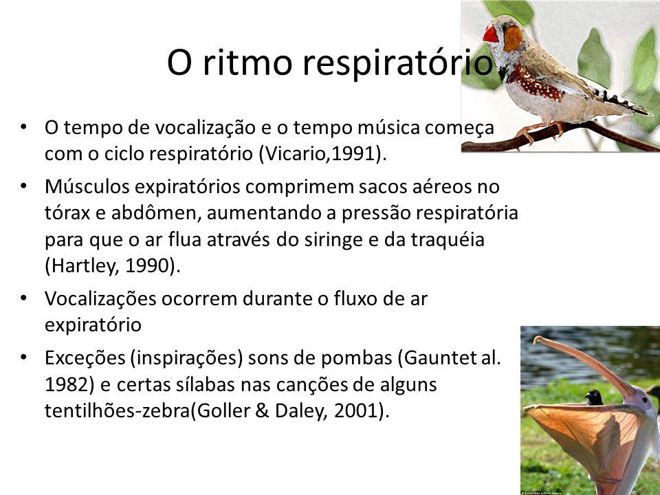 O ritmo respiratório O tempo de vocalização e o tempo música começa com o ciclo respiratório (Vicario,1991). Músculos expiratórios comprimem sacos aér