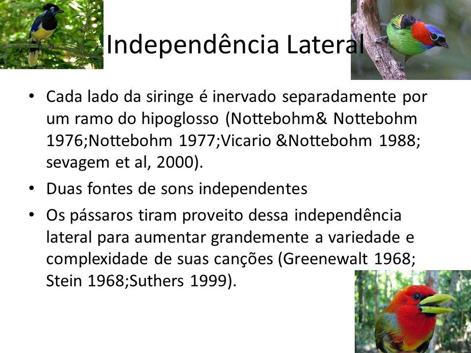 Independência Lateral Cada lado da siringe é inervado separadamente por um ramo do hipoglosso (Nottebohm& Nottebohm 1976;Nottebohm 1977;Vicario &Notte