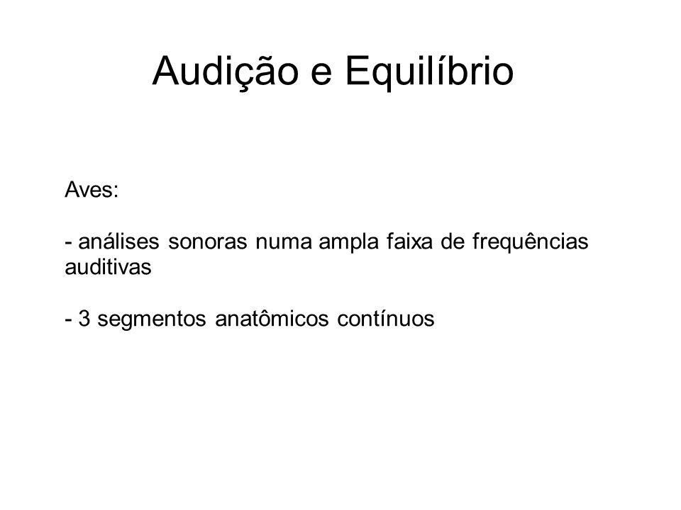 Audição e Equilíbrio Aves: - análises sonoras numa ampla faixa de frequências auditivas - 3 segmentos anatômicos contínuos