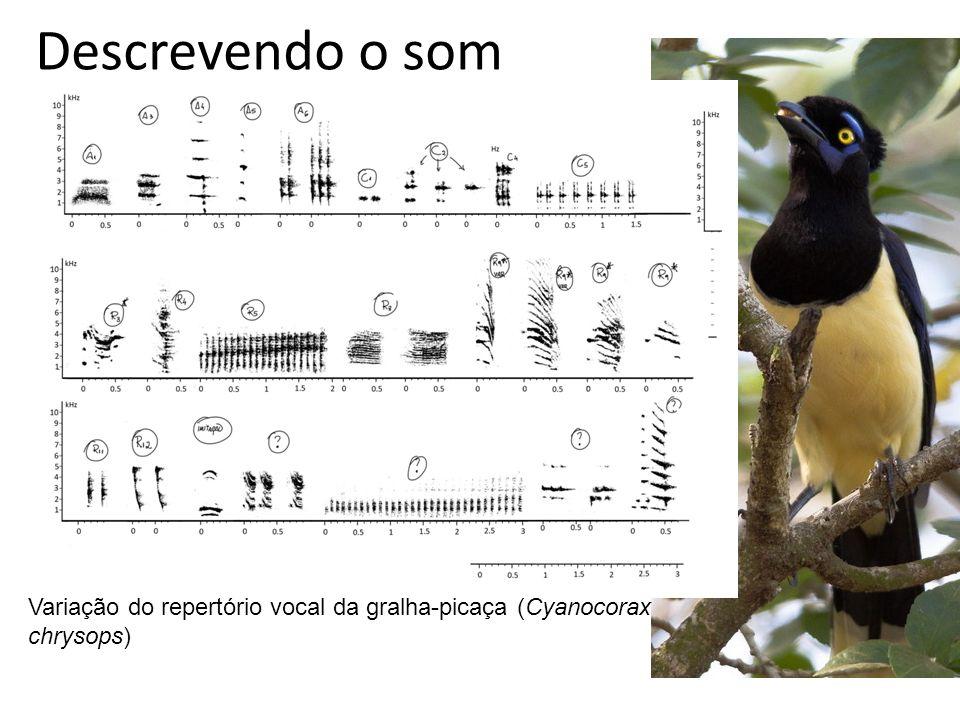 Variação do repertório vocal da gralha-picaça (Cyanocorax chrysops)