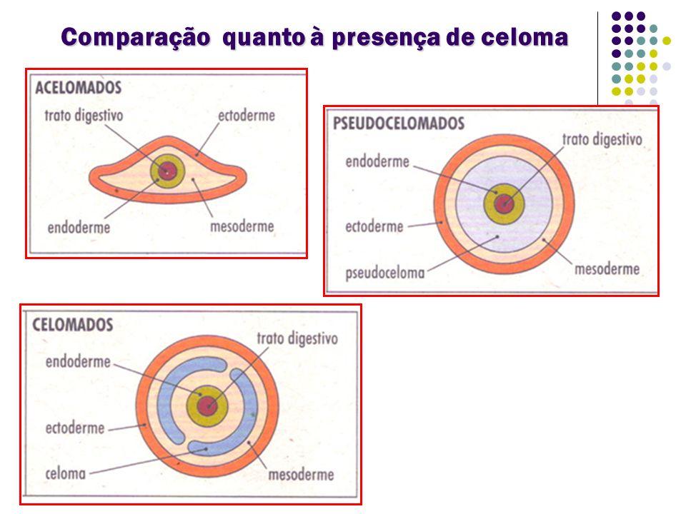 FORMAÇÃO DO CELOMA
