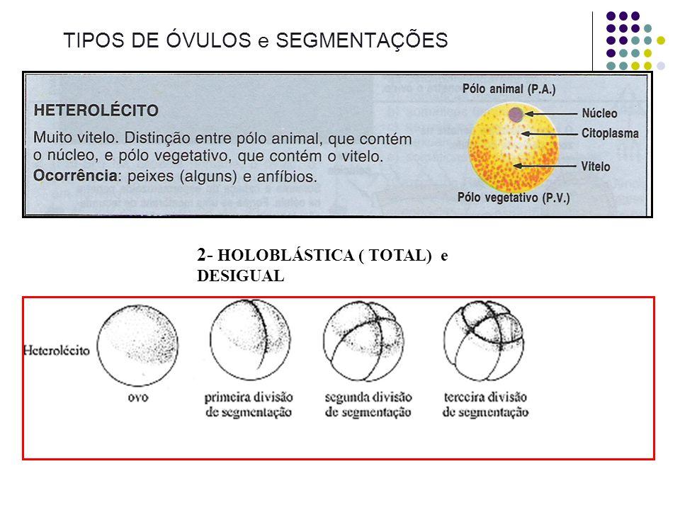 TIPOS DE ÓVULOS e SEGMENTAÇÕES 1- HOLOBLÁSTICA ( TOTAL) e IGUAL