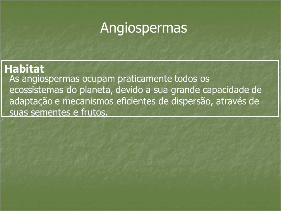 Angiospermas Habitat As angiospermas ocupam praticamente todos os ecossistemas do planeta, devido a sua grande capacidade de adaptação e mecanismos ef