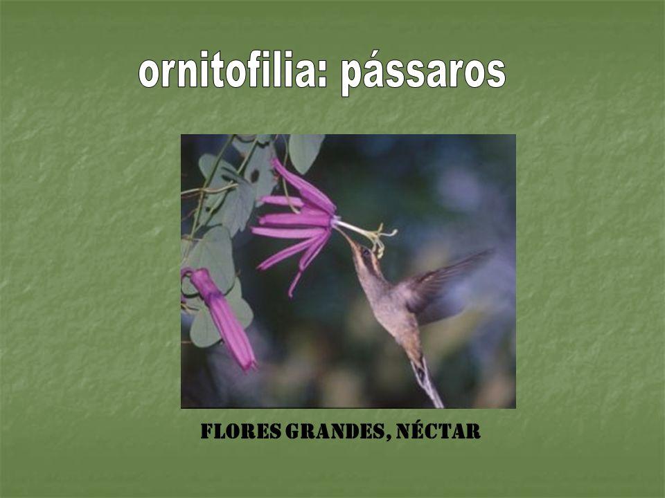 Flores grandes, néctar