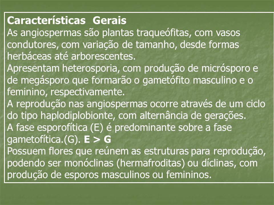 Características Gerais As angiospermas são plantas traqueófitas, com vasos condutores, com variação de tamanho, desde formas herbáceas até arborescent