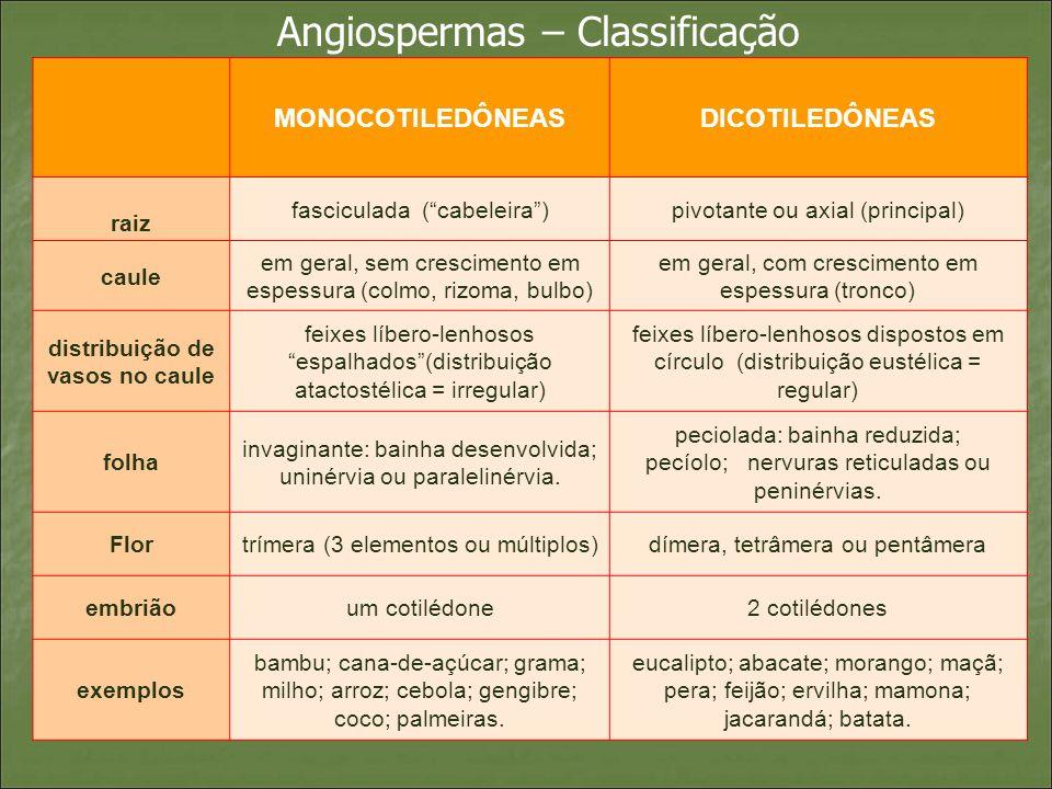 Angiospermas – Classificação MONOCOTILEDÔNEASDICOTILEDÔNEAS raiz fasciculada (cabeleira)pivotante ou axial (principal) caule em geral, sem crescimento