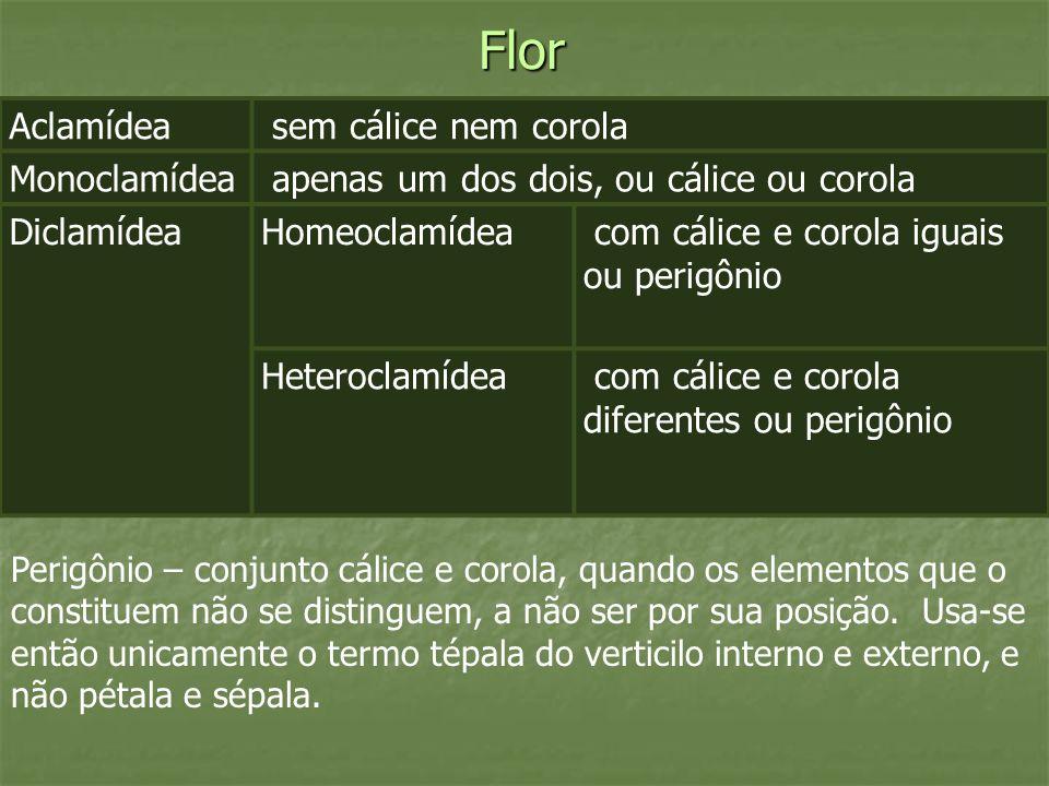 Flor Aclamídea sem cálice nem corola Monoclamídea apenas um dos dois, ou cálice ou corola DiclamídeaHomeoclamídea com cálice e corola iguais ou perigô