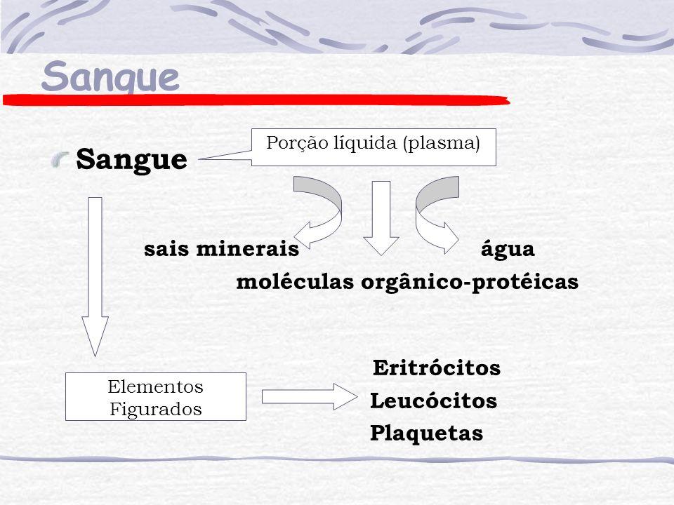 Leucócitos (granulócitos) Polimorfonucleares Neutrófilos - 55 a 60% Eosinófilos - 2 a 3% Basófilos - < de 1% Neutrófilo Basófilo Eosinófilo