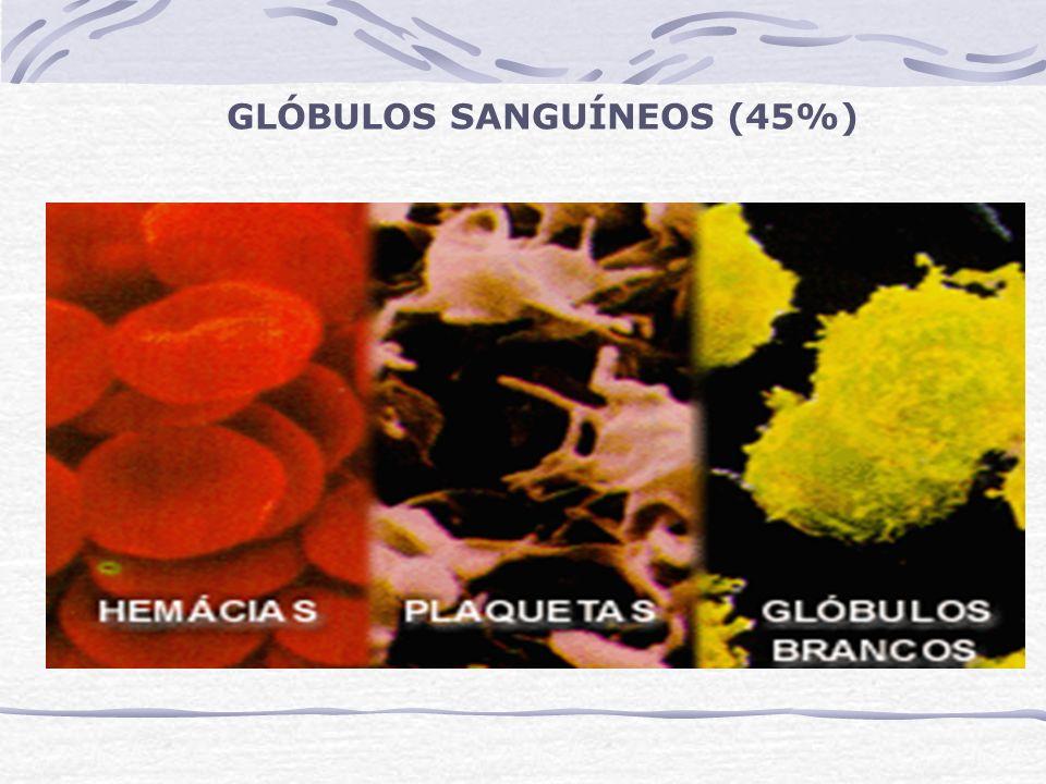 Leucócitos (agranulócitos) Mononucleares Monócitos – 3 a 7% Linfócitos – 30 a 35% Monócito Linfócito