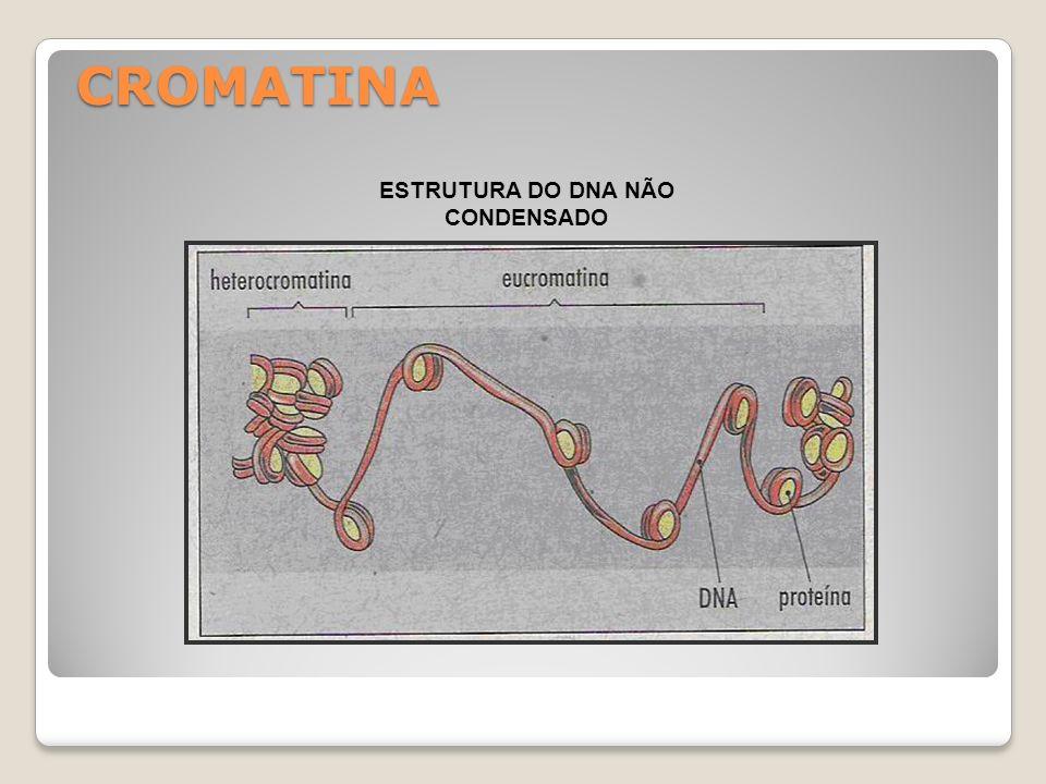 DNA ESTRUTURA DO DNA ( WATSON e CRICK – 1953)