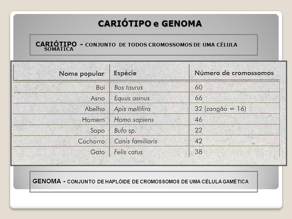 CODENSAÇÃO DO CROMOSSOMO DURANTE A DIVISÃO CELULAR