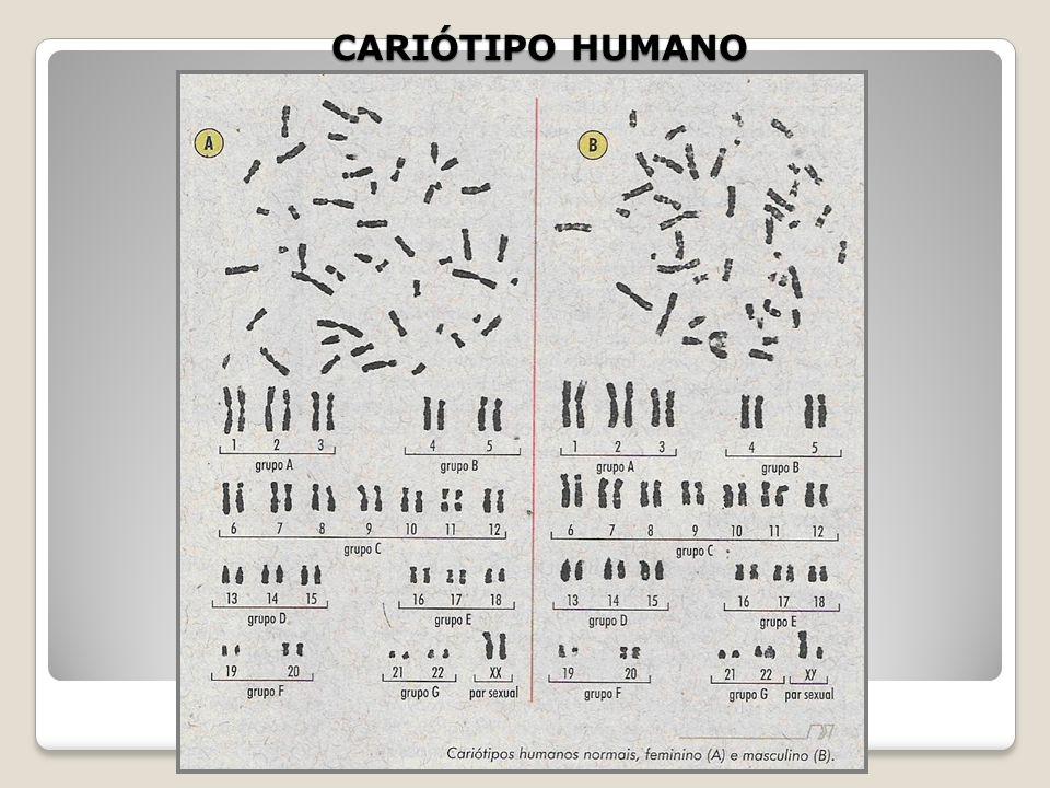 CARIÓTIPO e GENOMA CARIÓTIPO - CONJUNTO DE TODOS CROMOSSOMOS DE UMA CÉLULA SOMÁTICA GENOMA - CONJUNTO DE HAPLÓIDE DE CROMOSSOMOS DE UMA CÉLULA GAMÉTIC