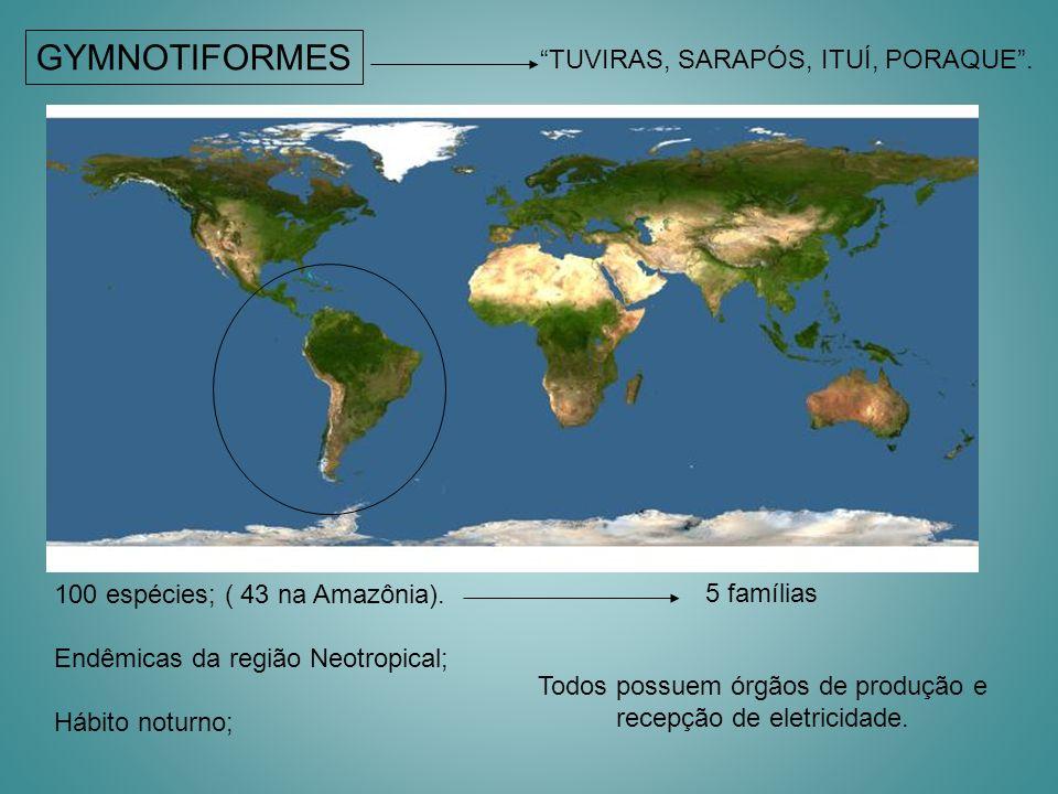 GYMNOTIFORMES TUVIRAS, SARAPÓS, ITUÍ, PORAQUE. 100 espécies; ( 43 na Amazônia). Endêmicas da região Neotropical; Hábito noturno; Todos possuem órgãos