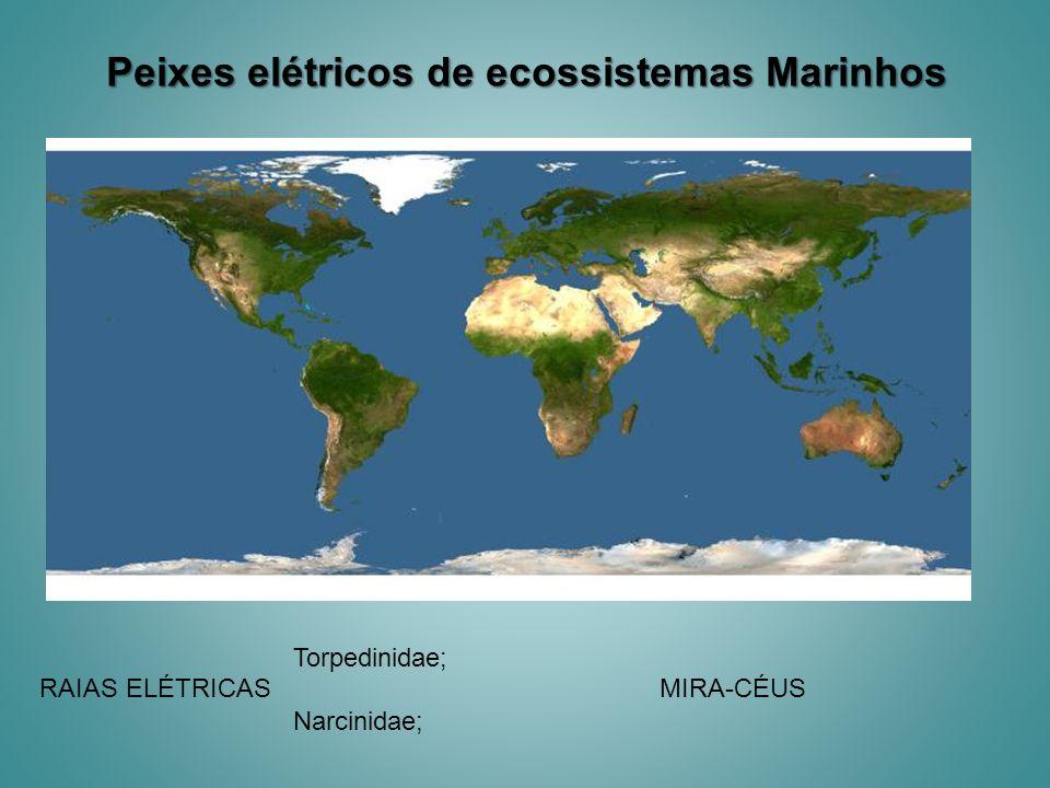 Peixes elétricos de ecossistemas Marinhos RAIAS ELÉTRICAS Torpedinidae; Narcinidae; MIRA-CÉUS