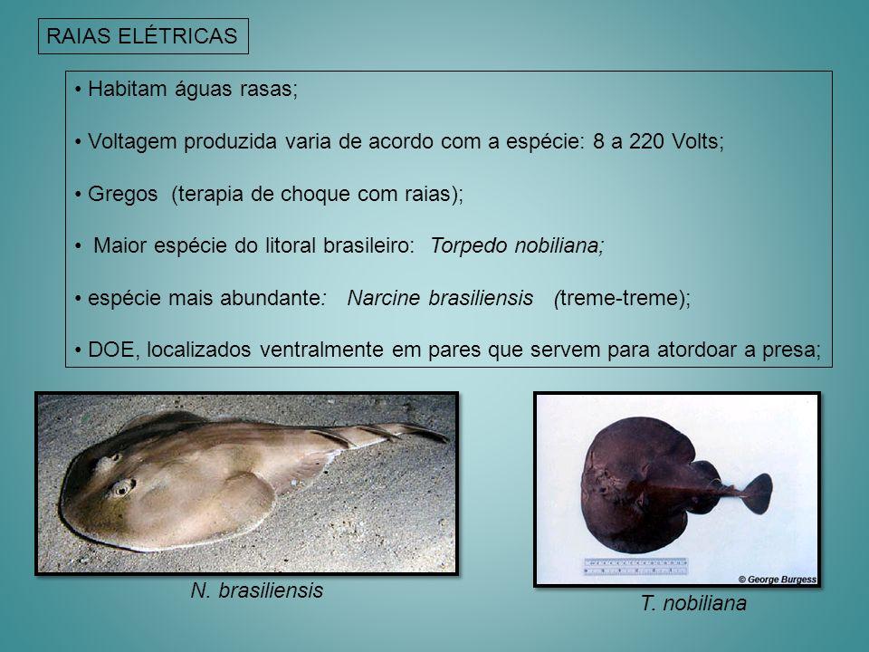 Habitam águas rasas; Voltagem produzida varia de acordo com a espécie: 8 a 220 Volts; Gregos (terapia de choque com raias); Maior espécie do litoral b