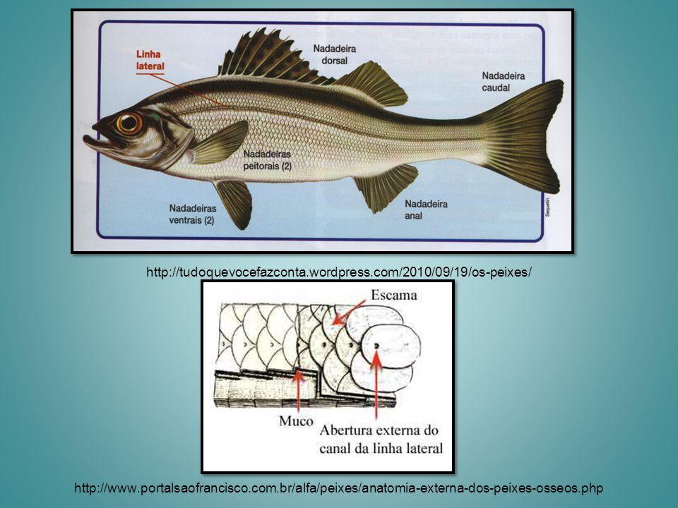 http://tudoquevocefazconta.wordpress.com/2010/09/19/os-peixes/ http://www.portalsaofrancisco.com.br/alfa/peixes/anatomia-externa-dos-peixes-osseos.php