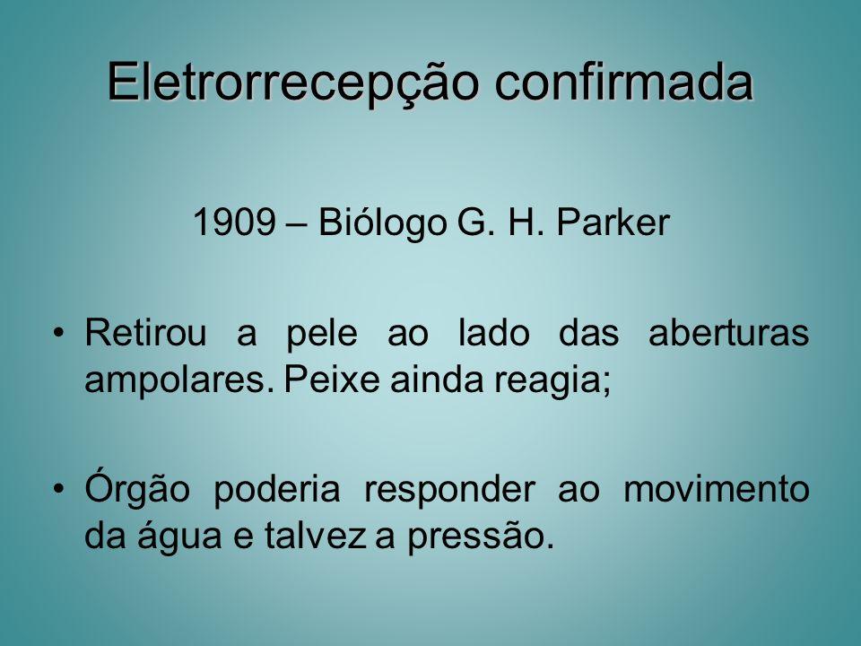 Eletrorrecepção confirmada 1909 – Biólogo G. H. Parker Retirou a pele ao lado das aberturas ampolares. Peixe ainda reagia; Órgão poderia responder ao