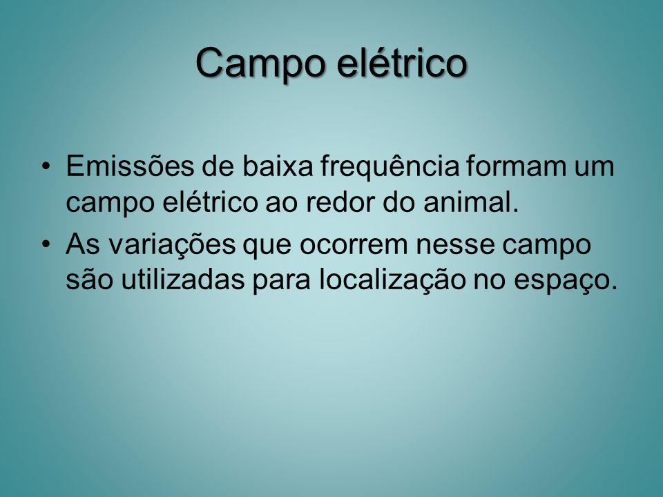 Campo elétrico Emissões de baixa frequência formam um campo elétrico ao redor do animal. As variações que ocorrem nesse campo são utilizadas para loca