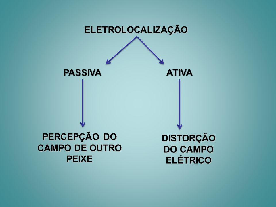 ELETROLOCALIZAÇÃO PASSIVAATIVA PERCEPÇÃO DO CAMPO DE OUTRO PEIXE DISTORÇÃO DO CAMPO ELÉTRICO