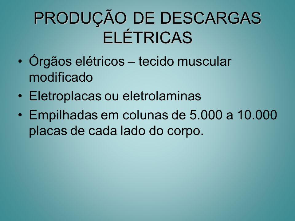 PRODUÇÃO DE DESCARGAS ELÉTRICAS Órgãos elétricos – tecido muscular modificado Eletroplacas ou eletrolaminas Empilhadas em colunas de 5.000 a 10.000 pl