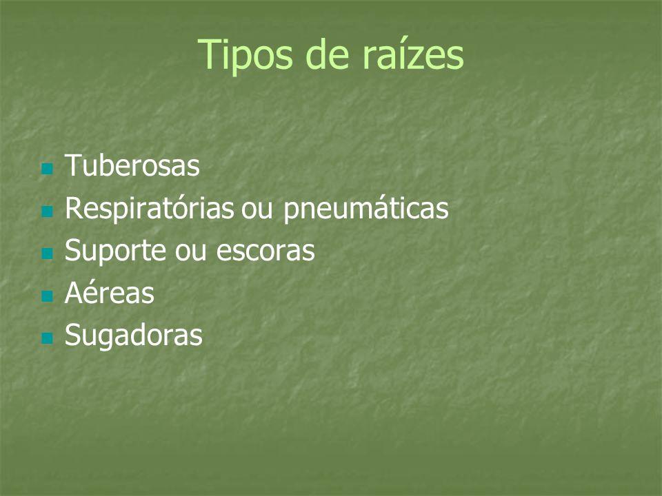 Tipos de raízes Tuberosas Respiratórias ou pneumáticas Suporte ou escoras Aéreas Sugadoras
